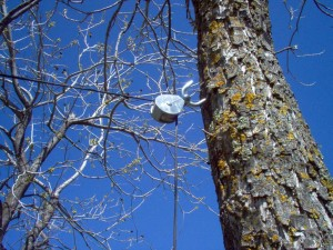 Tree Support Pulley